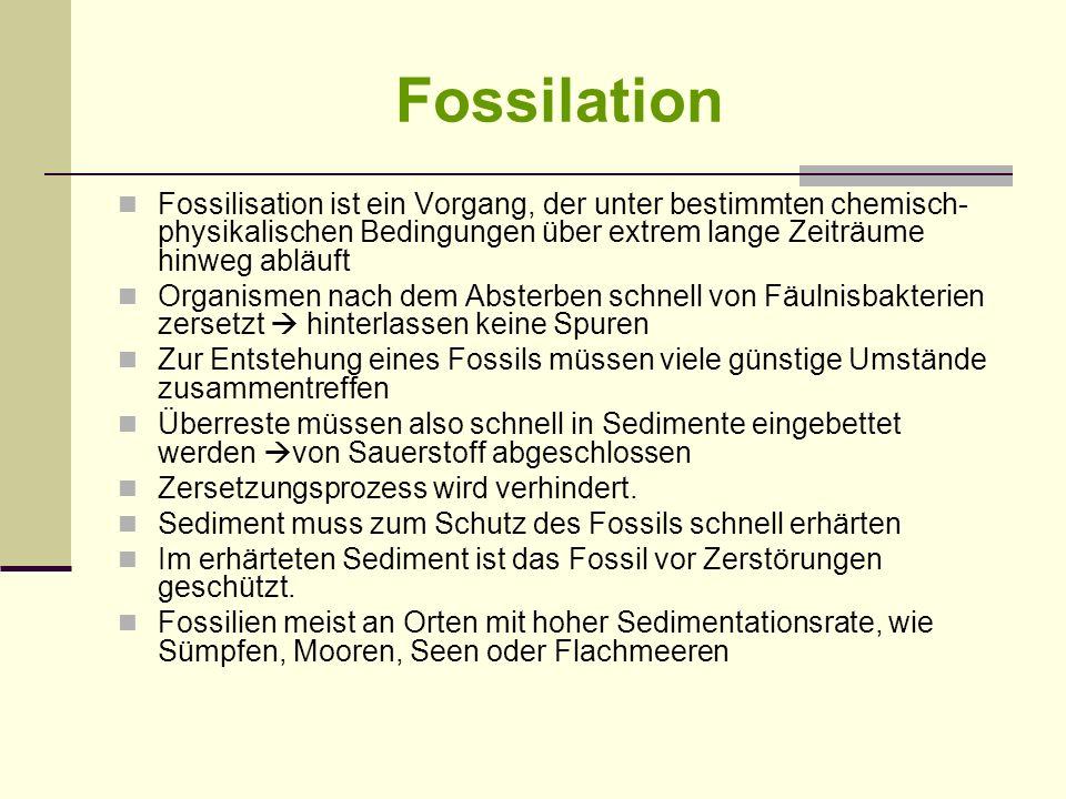 Fossilation Fossilisation ist ein Vorgang, der unter bestimmten chemisch- physikalischen Bedingungen über extrem lange Zeiträume hinweg abläuft Organi