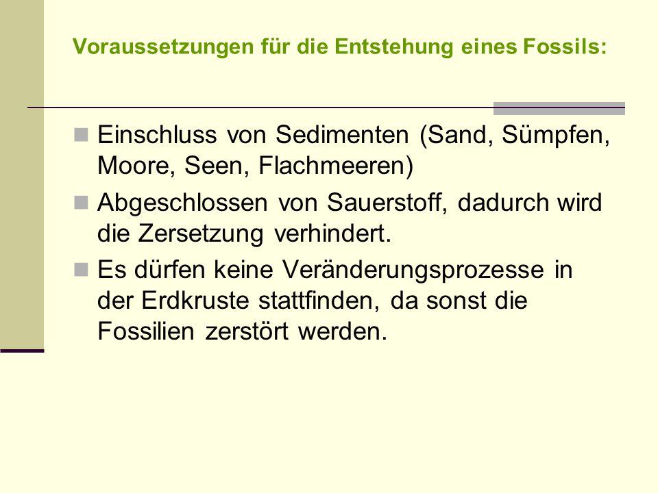 Voraussetzungen für die Entstehung eines Fossils: Einschluss von Sedimenten (Sand, Sümpfen, Moore, Seen, Flachmeeren) Abgeschlossen von Sauerstoff, da