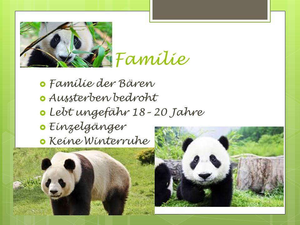 Familie  Familie der Bären  Aussterben bedroht  Lebt ungefähr 18– 20 Jahre  Einzelgänger  Keine Winterruhe