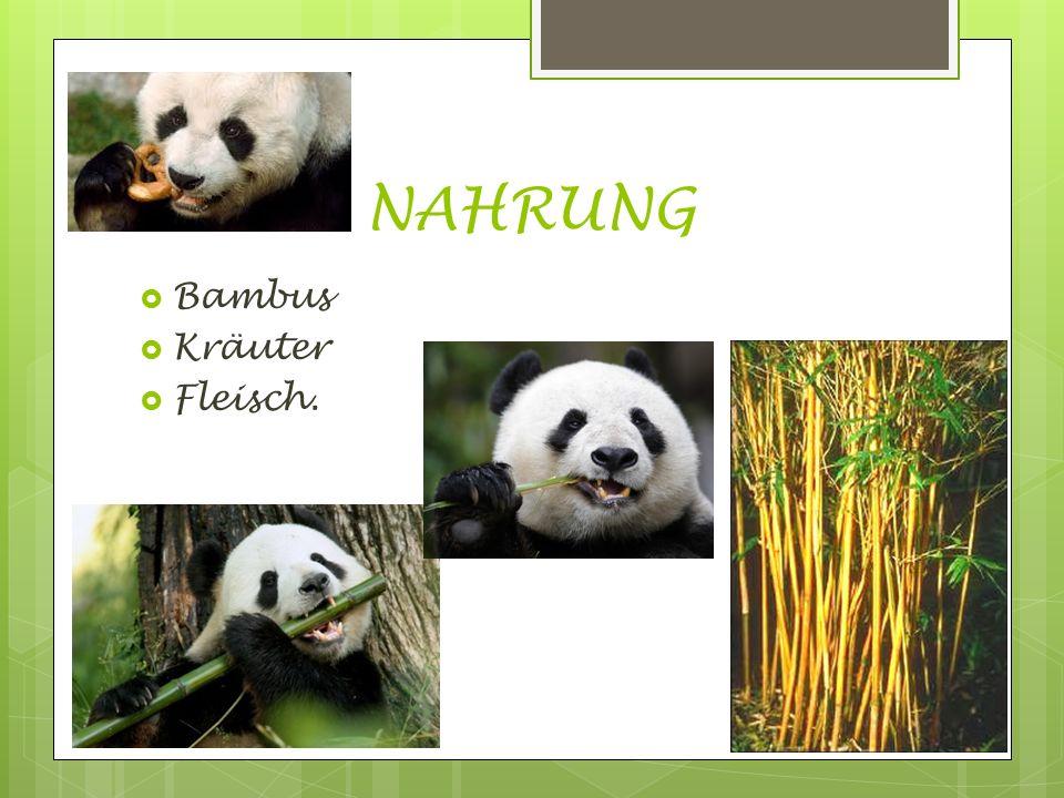 NAHRUNG  Bambus  Kräuter  Fleisch.