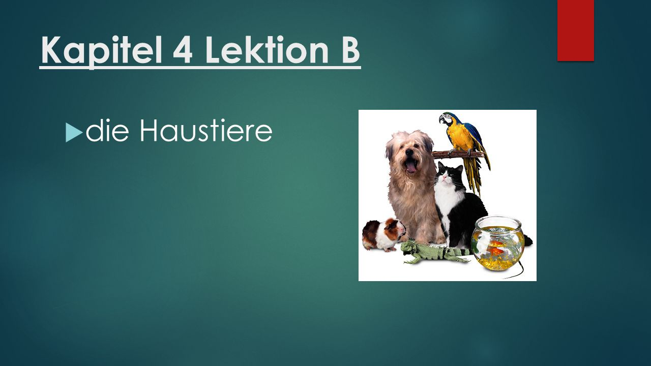 Kapitel 4 Lektion B  die Haustiere