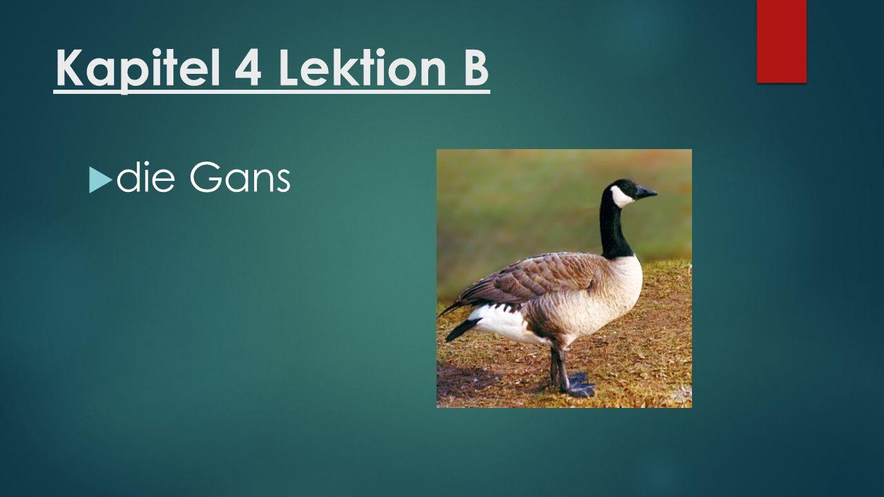 Kapitel 4 Lektion B  die Gans