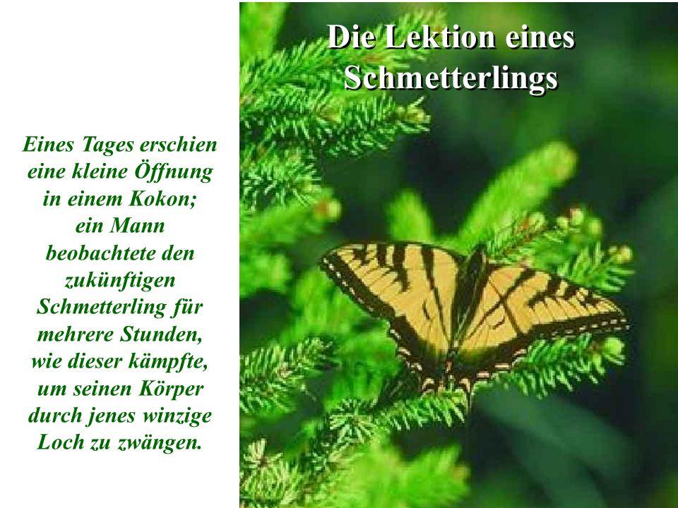 Die Lektion eines Schmetterlings Eines Tages erschien eine kleine Öffnung in einem Kokon; ein Mann beobachtete den zukünftigen Schmetterling für mehrere Stunden, wie dieser kämpfte, um seinen Körper durch jenes winzige Loch zu zwängen.