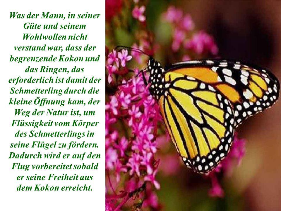 Was der Mann, in seiner Güte und seinem Wohlwollen nicht verstand war, dass der begrenzende Kokon und das Ringen, das erforderlich ist damit der Schmetterling durch die kleine Öffnung kam, der Weg der Natur ist, um Flüssigkeit vom Körper des Schmetterlings in seine Flügel zu fördern.