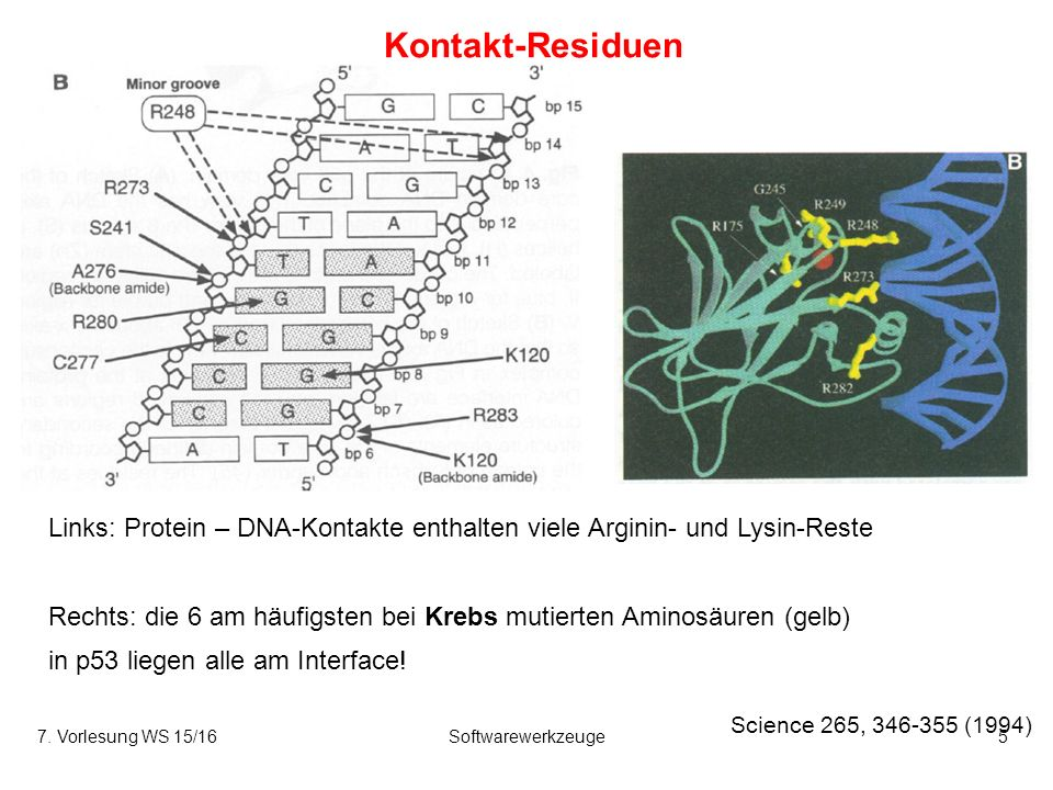 7. Vorlesung WS 15/16Softwarewerkzeuge26 Energetik der Assoziation hydrophiler Proteine