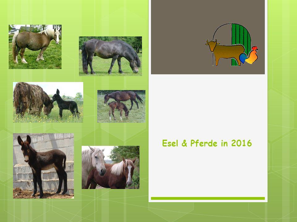 Esel & Pferde in 2016