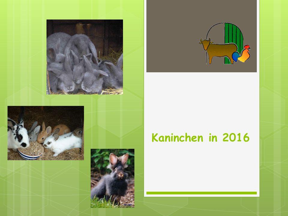 Kaninchen in 2016