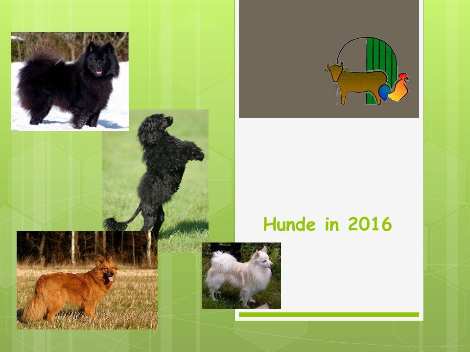 Hunde in 2016