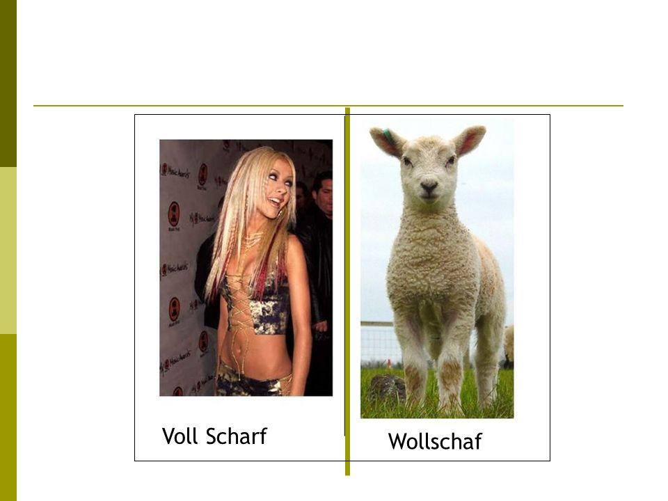 Voll Scharf Wollschaf