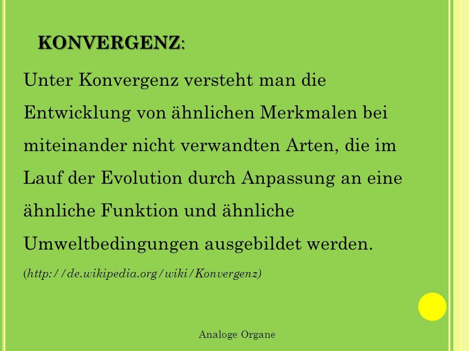 KONVERGENZ : Unter Konvergenz versteht man die Entwicklung von ähnlichen Merkmalen bei miteinander nicht verwandten Arten, die im Lauf der Evolution d