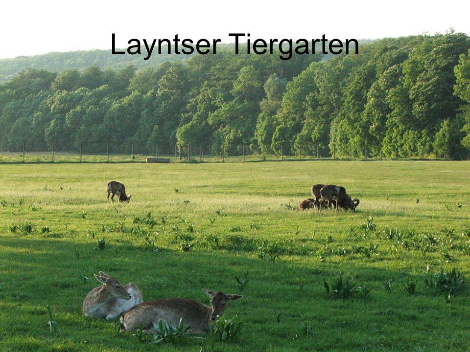 Layntser Tiergarten