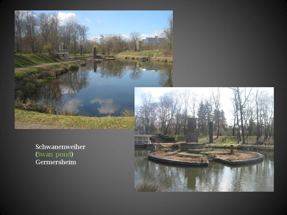 Schwanenweiher (Swan pond) Germersheim