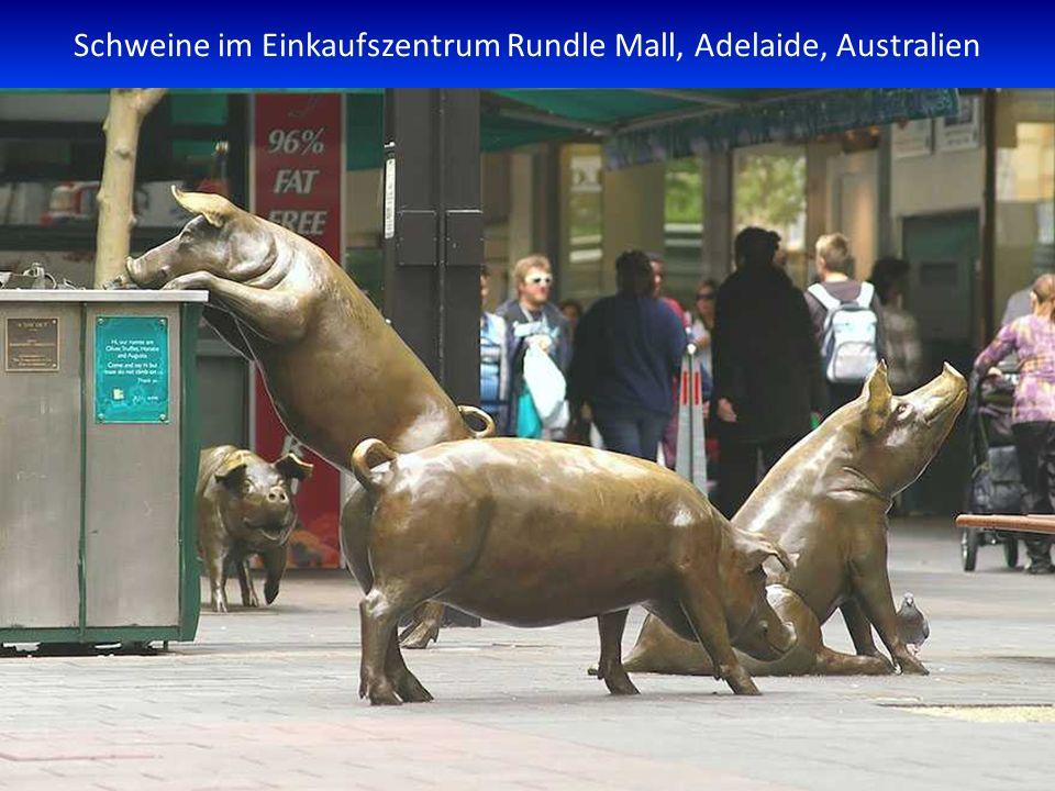 Schweine im Einkaufszentrum Rundle Mall, Adelaide, Australien