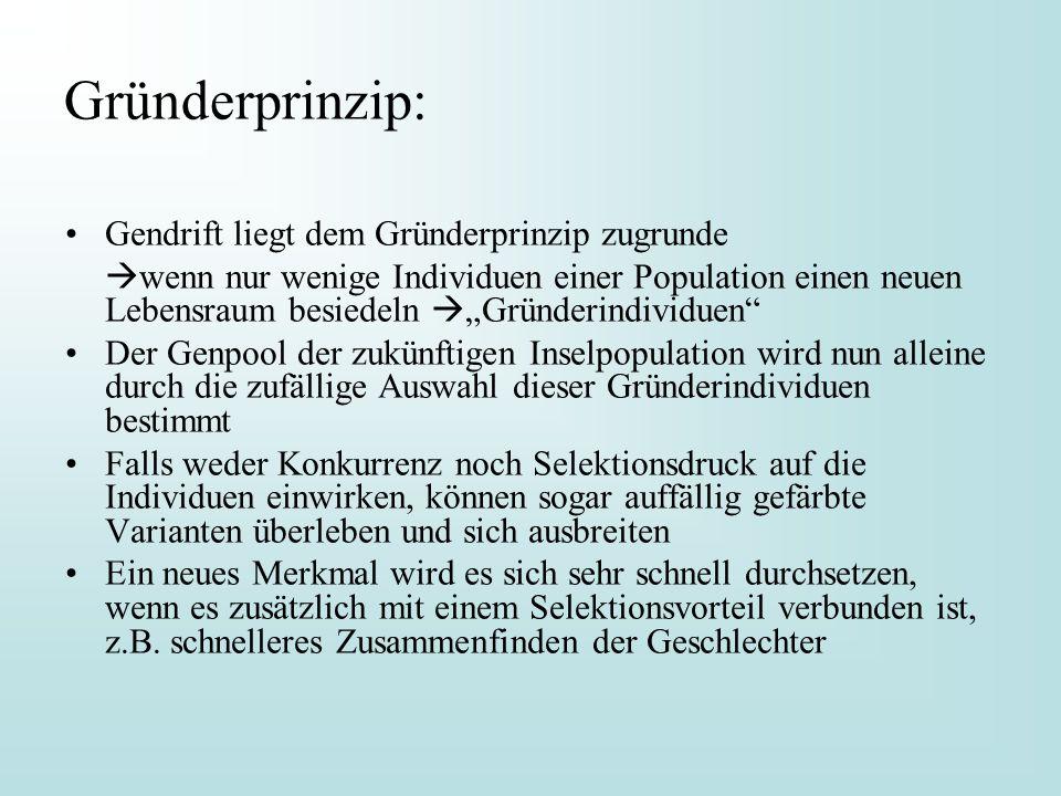 """Gründerprinzip: Gendrift liegt dem Gründerprinzip zugrunde  wenn nur wenige Individuen einer Population einen neuen Lebensraum besiedeln  """"Gründerin"""