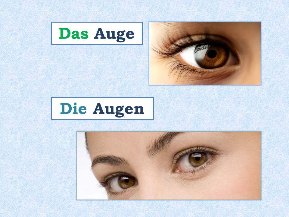Das Auge Die Augen