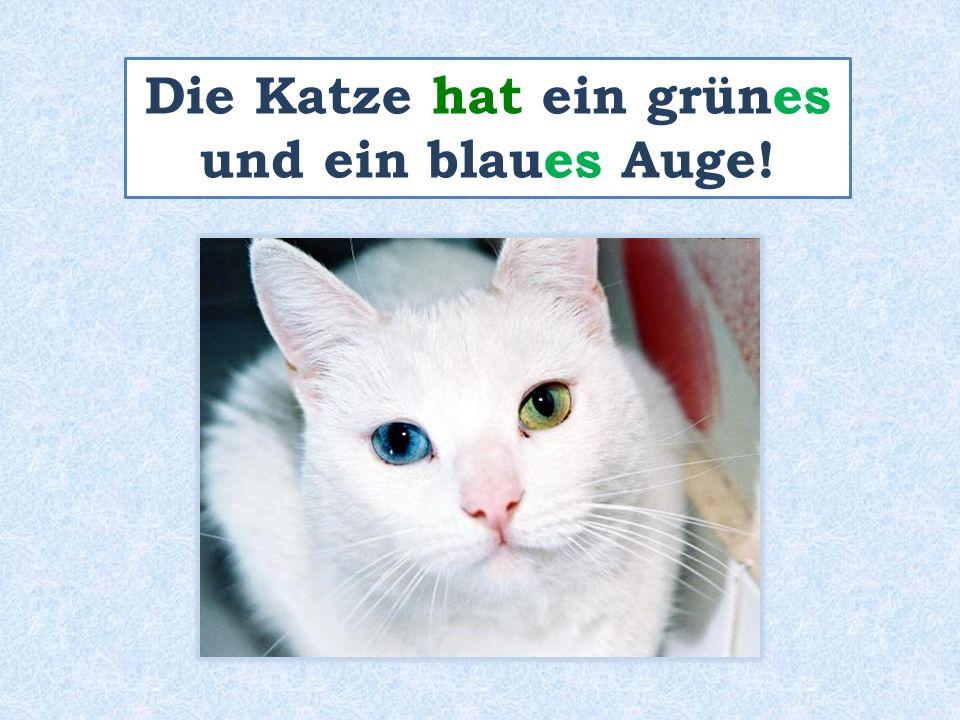 Die Katze hat ein grünes und ein blaues Auge!