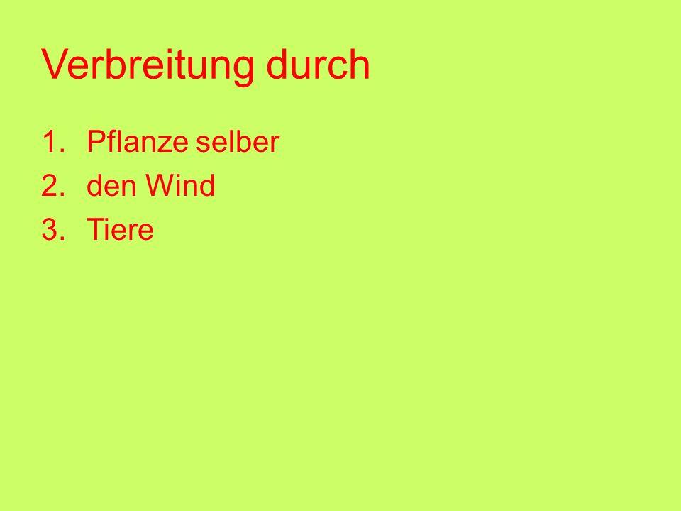 Verbreitung durch 1.Pflanze selber 2.den Wind 3.Tiere