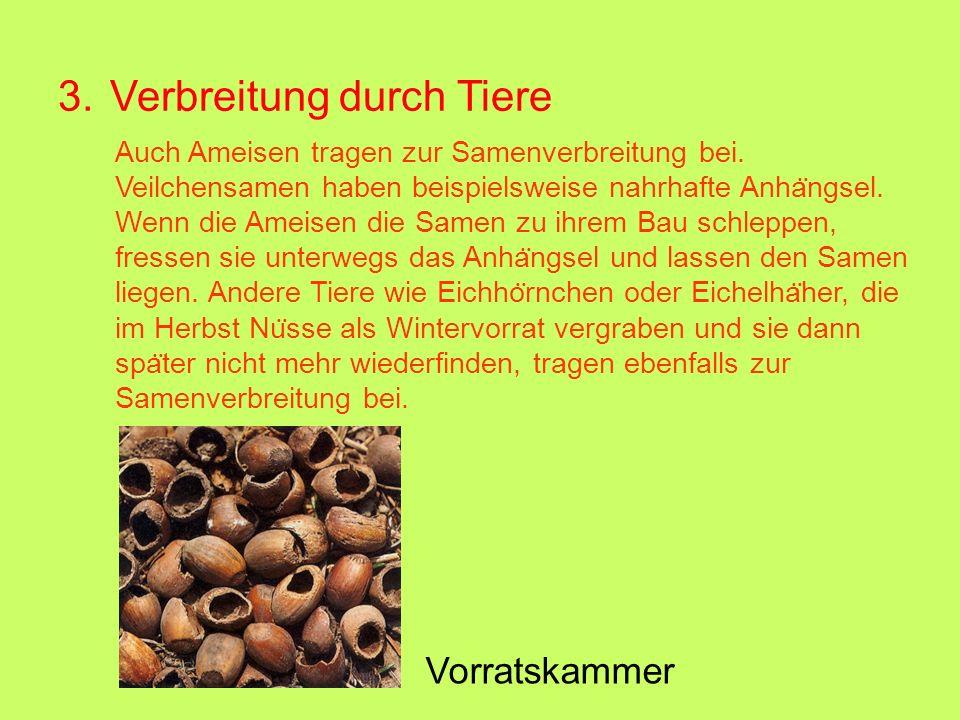 3. Verbreitung durch Tiere Vorratskammer Auch Ameisen tragen zur Samenverbreitung bei. Veilchensamen haben beispielsweise nahrhafte Anha ̈ ngsel. Wenn