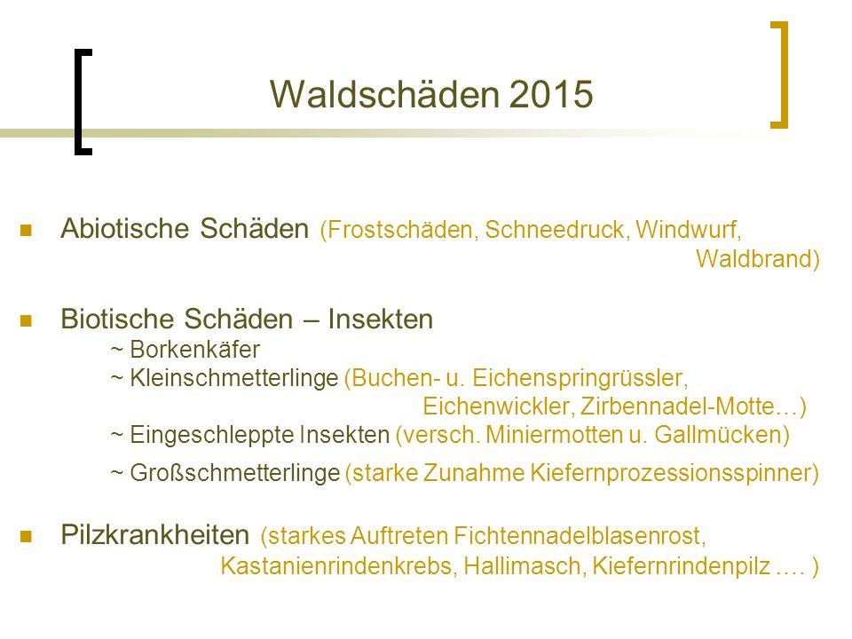 Waldschäden 2015 Abiotische Schäden (Frostschäden, Schneedruck, Windwurf, Waldbrand) Biotische Schäden – Insekten ~ Borkenkäfer ~ Kleinschmetterlinge (Buchen- u.