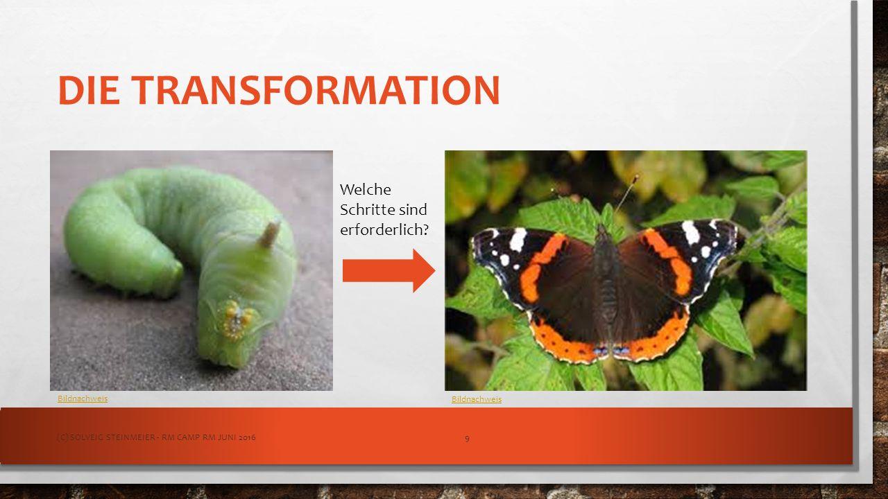DIE TRANSFORMATION Welche Schritte sind erforderlich? Bildnachweis (C) SOLVEIG STEINMEIER - RM CAMP RM JUNI 20169