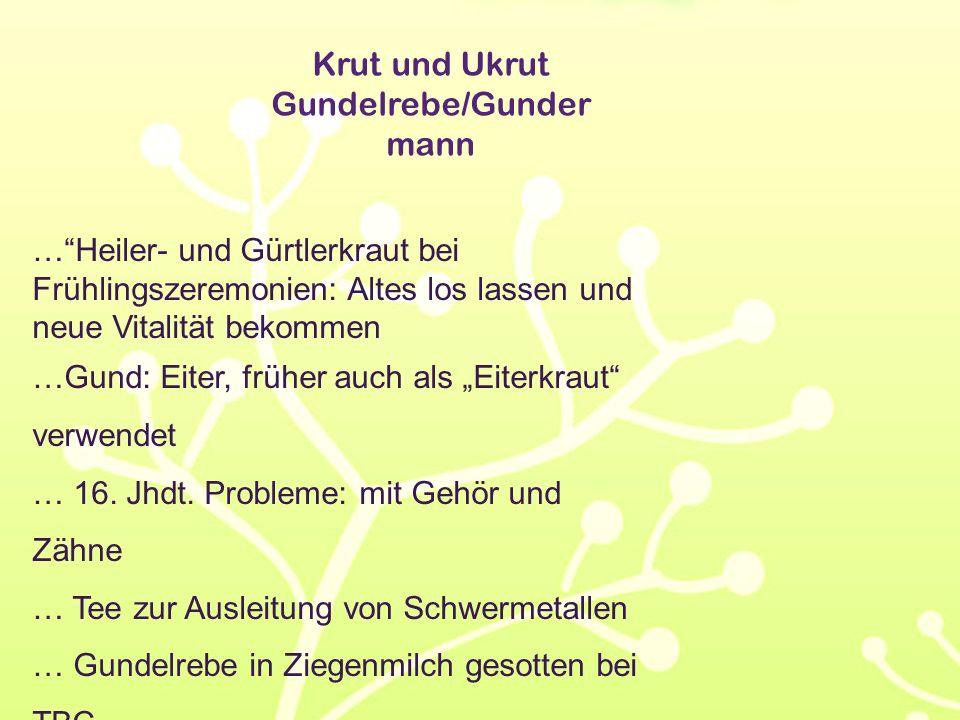 """Krut und Ukrut Gundelrebe/Gunder mann …""""Heiler- und Gürtlerkraut bei Frühlingszeremonien: Altes los lassen und neue Vitalität bekommen …Gund: Eiter, f"""