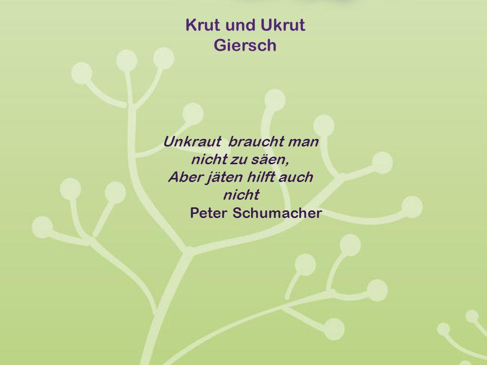 Krut und Ukrut Giersch Unkraut braucht man nicht zu säen, Aber jäten hilft auch nicht Peter Schumacher