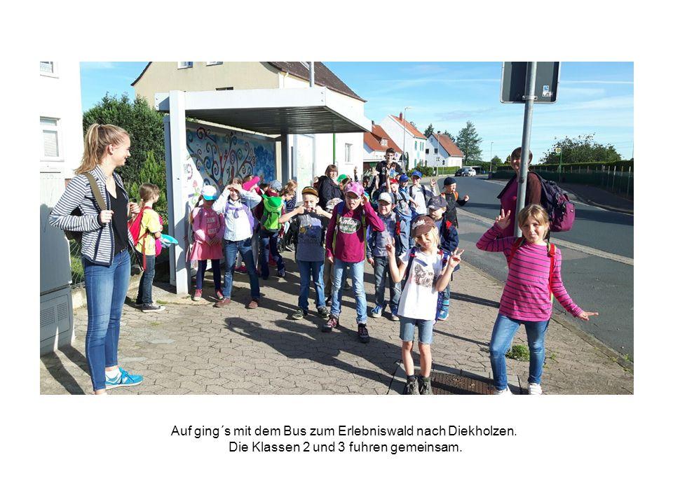 Auf ging´s mit dem Bus zum Erlebniswald nach Diekholzen. Die Klassen 2 und 3 fuhren gemeinsam.