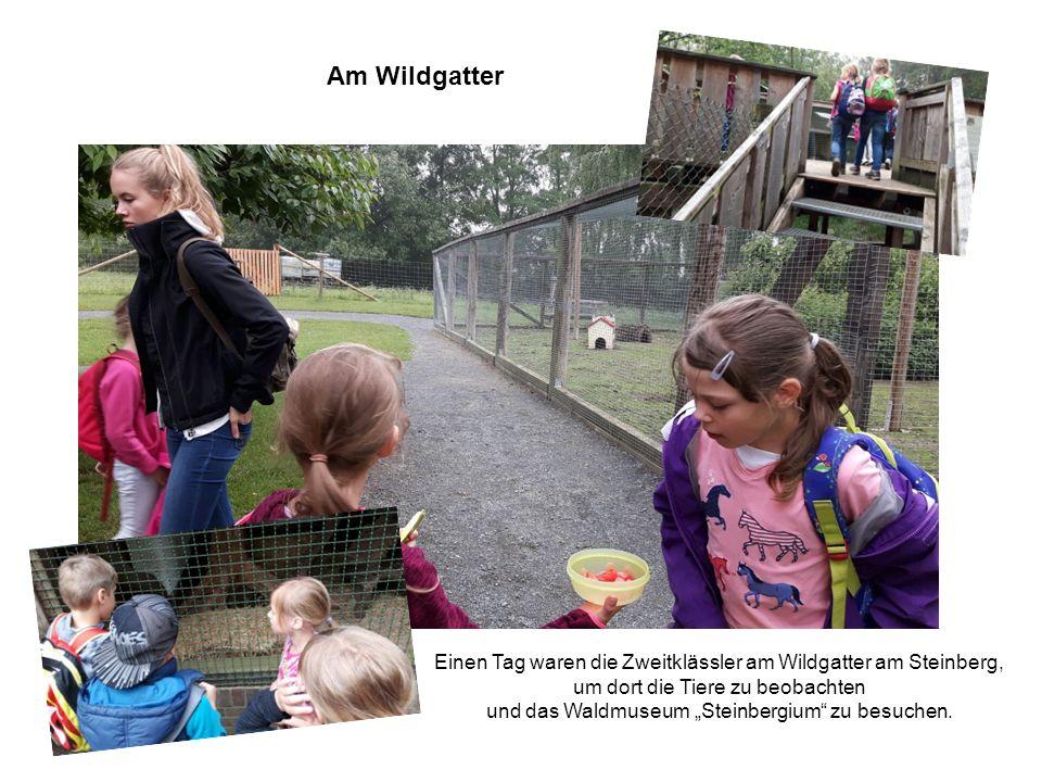 Am Wildgatter Das Waldparfüm und seine Meister! Einen Tag waren die Zweitklässler am Wildgatter am Steinberg, um dort die Tiere zu beobachten und das