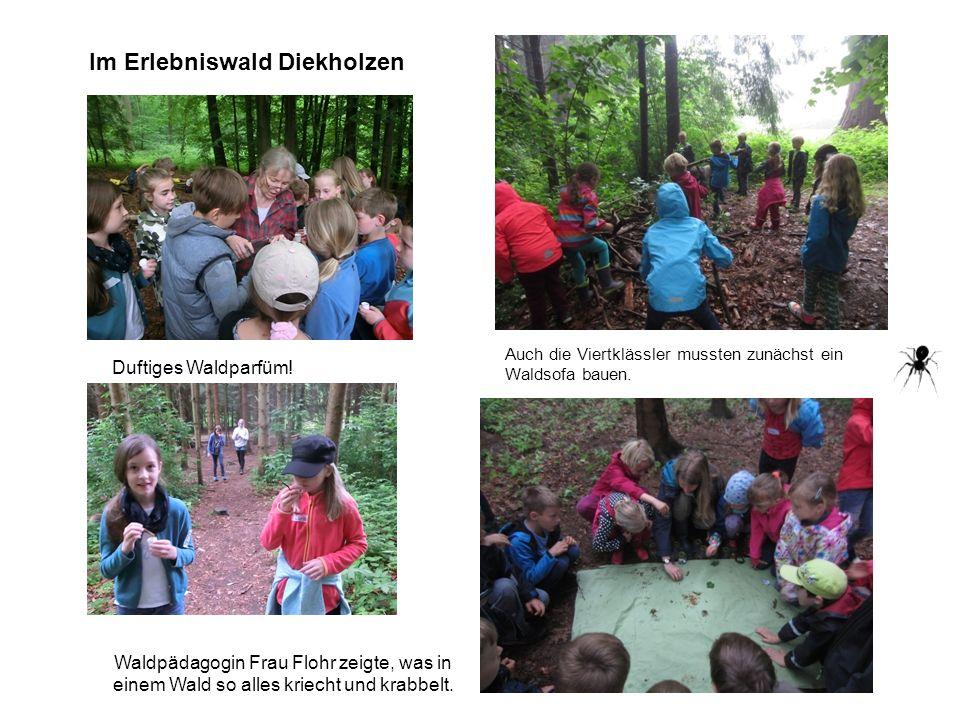 Auch die Viertklässler mussten zunächst ein Waldsofa bauen. Im Erlebniswald Diekholzen Duftiges Waldparfüm! Waldpädagogin Frau Flohr zeigte, was in ei