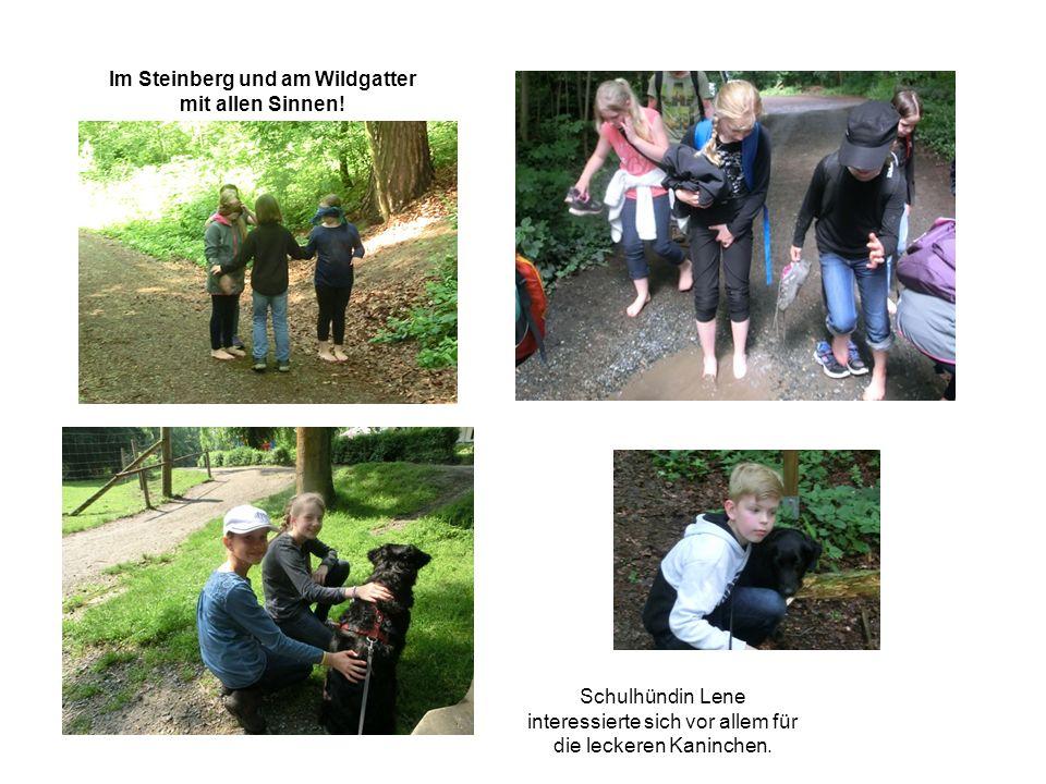 Schulhündin Lene interessierte sich vor allem für die leckeren Kaninchen. Im Steinberg und am Wildgatter mit allen Sinnen!