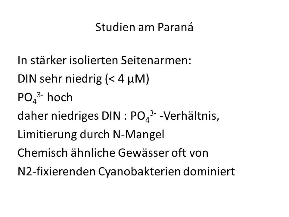 Studien am Paraná In stärker isolierten Seitenarmen: DIN sehr niedrig (< 4 µM) PO 4 3- hoch daher niedriges DIN : PO 4 3- -Verhältnis, Limitierung dur