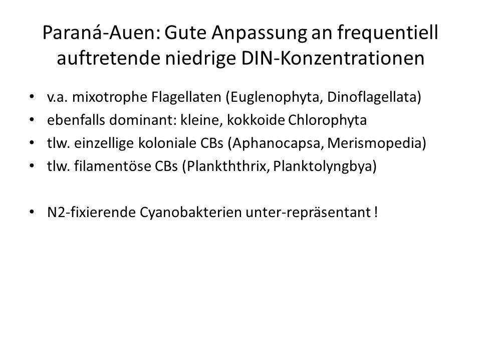Paraná-Auen: Gute Anpassung an frequentiell auftretende niedrige DIN-Konzentrationen v.a. mixotrophe Flagellaten (Euglenophyta, Dinoflagellata) ebenfa