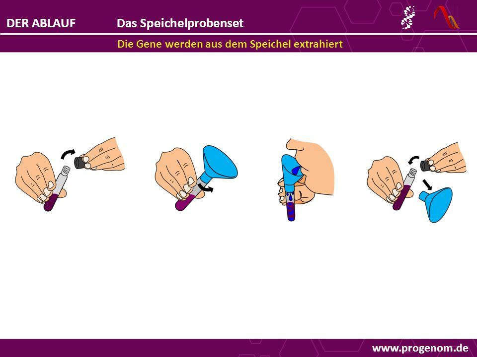 DER ABLAUFDas Speichelprobenset Die Gene werden aus dem Speichel extrahiert www.progenom.de