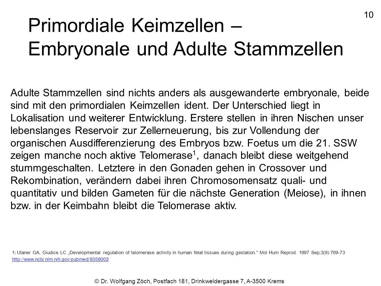 © Dr. Wolfgang Zöch, Postfach 181, Drinkweldergasse 7, A-3500 Krems Primordiale Keimzellen – Embryonale und Adulte Stammzellen Adulte Stammzellen sind
