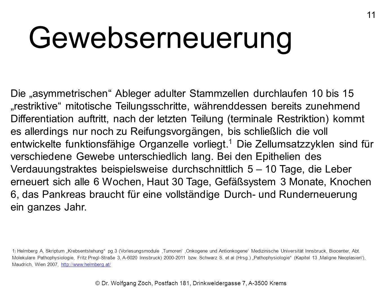 """© Dr. Wolfgang Zöch, Postfach 181, Drinkweldergasse 7, A-3500 Krems Gewebserneuerung Die """"asymmetrischen"""" Ableger adulter Stammzellen durchlaufen 10 b"""