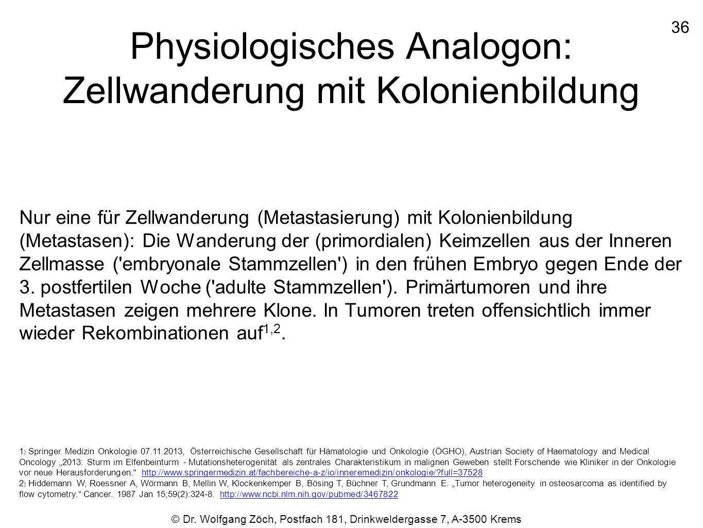 Physiologisches Analogon: Zellwanderung mit Kolonienbildung Nur eine für Zellwanderung (Metastasierung) mit Kolonienbildung (Metastasen): Die Wanderun