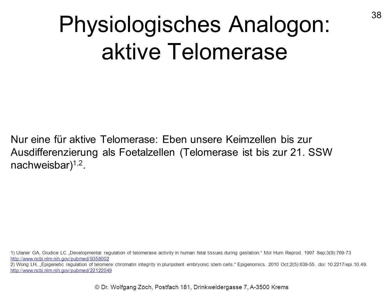 Physiologisches Analogon: aktive Telomerase Nur eine für aktive Telomerase: Eben unsere Keimzellen bis zur Ausdifferenzierung als Foetalzellen (Telome