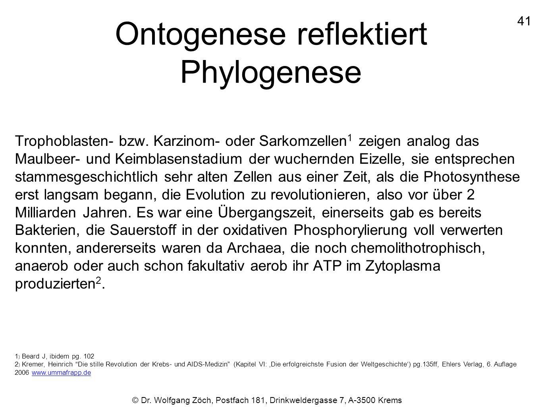 Ontogenese reflektiert Phylogenese Trophoblasten- bzw. Karzinom- oder Sarkomzellen 1 zeigen analog das Maulbeer- und Keimblasenstadium der wuchernden