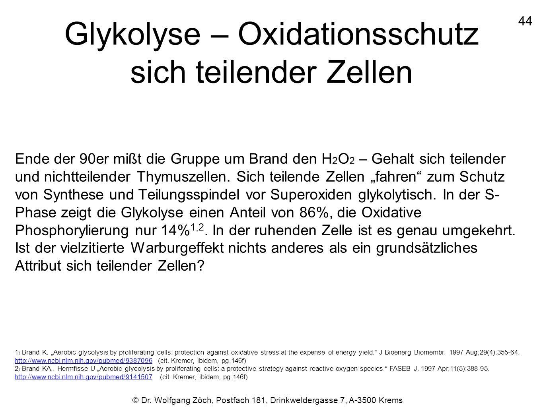Glykolyse – Oxidationsschutz sich teilender Zellen Ende der 90er mißt die Gruppe um Brand den H 2 O 2 – Gehalt sich teilender und nichtteilender Thymu