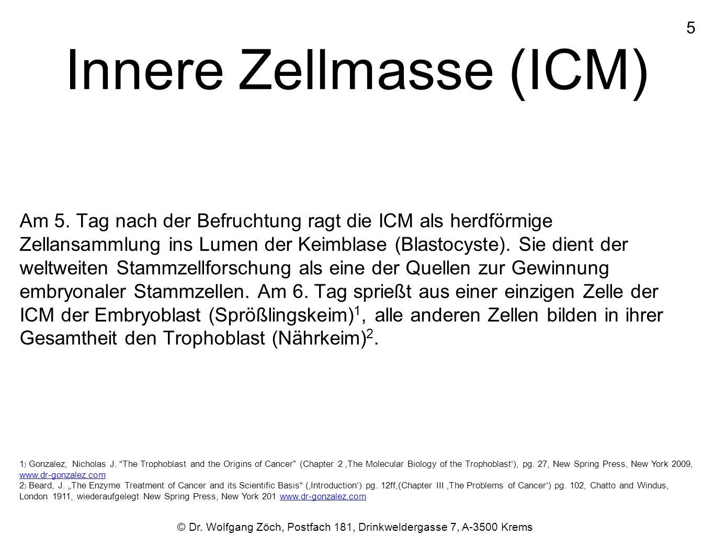 Innere Zellmasse (ICM) Am 5. Tag nach der Befruchtung ragt die ICM als herdförmige Zellansammlung ins Lumen der Keimblase (Blastocyste). Sie dient der