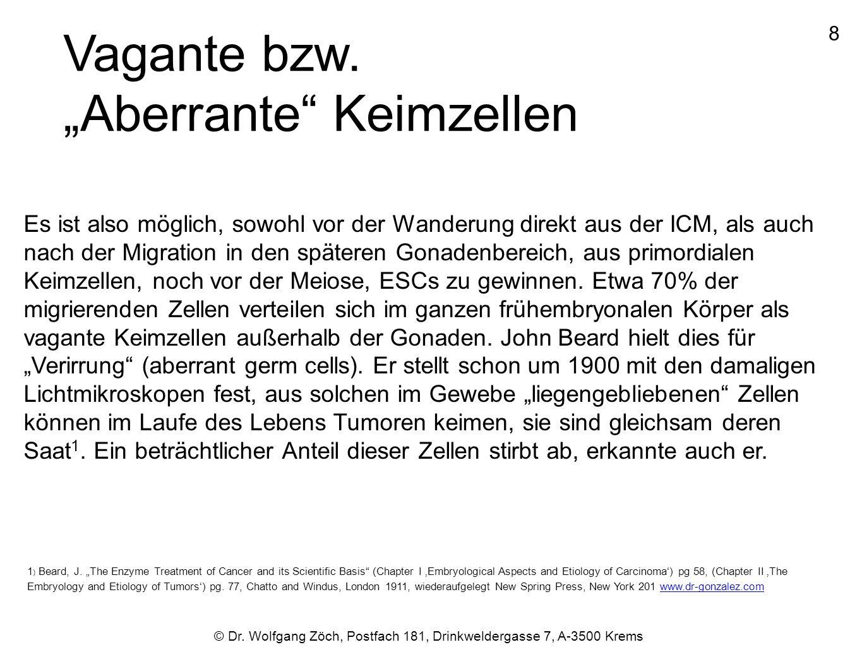 """© Dr. Wolfgang Zöch, Postfach 181, Drinkweldergasse 7, A-3500 Krems Vagante bzw. """"Aberrante"""" Keimzellen Es ist also möglich, sowohl vor der Wanderung"""