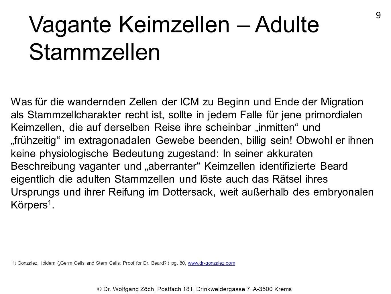 9 © Dr. Wolfgang Zöch, Postfach 181, Drinkweldergasse 7, A-3500 Krems Vagante Keimzellen – Adulte Stammzellen Was für die wandernden Zellen der ICM zu