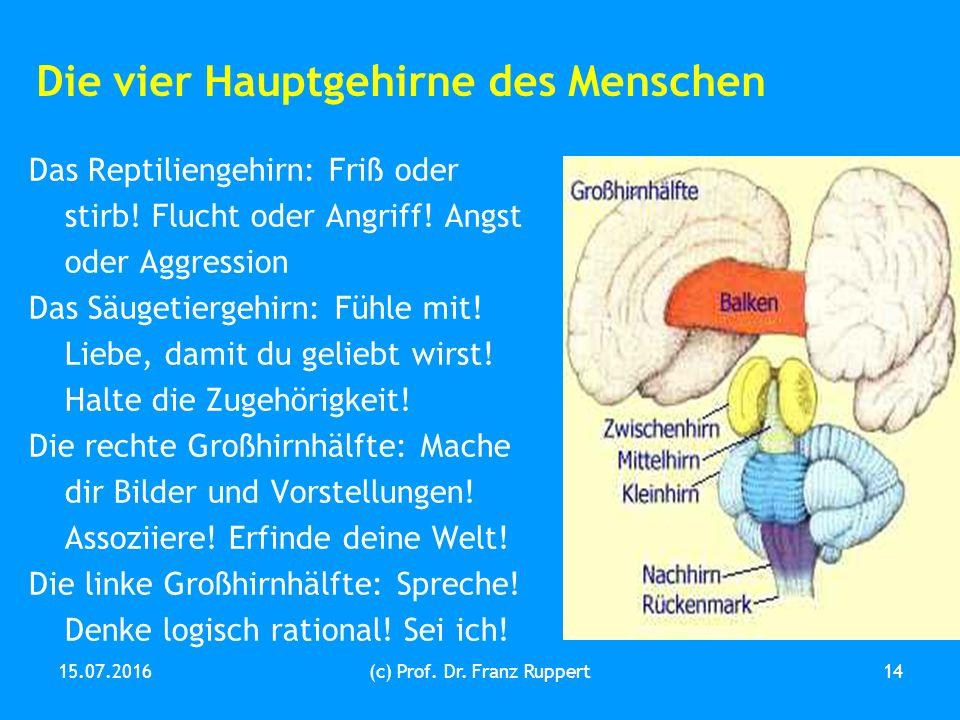 15.07.2016(c) Prof. Dr. Franz Ruppert14 Die vier Hauptgehirne des Menschen Das Reptiliengehirn: Friß oder stirb! Flucht oder Angriff! Angst oder Aggre