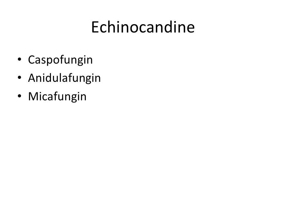 Echinocandine Caspofungin Anidulafungin Micafungin