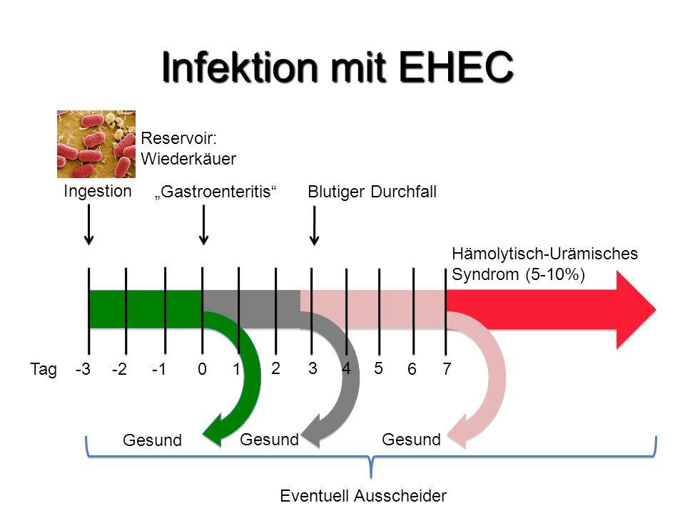 """Infektion mit EHEC Ingestion """"Gastroenteritis""""Blutiger Durchfall Hämolytisch-Urämisches Syndrom (5-10%) Gesund -3 -20Tag 1 2 3 5 4 6 7 Eventuell Aussc"""