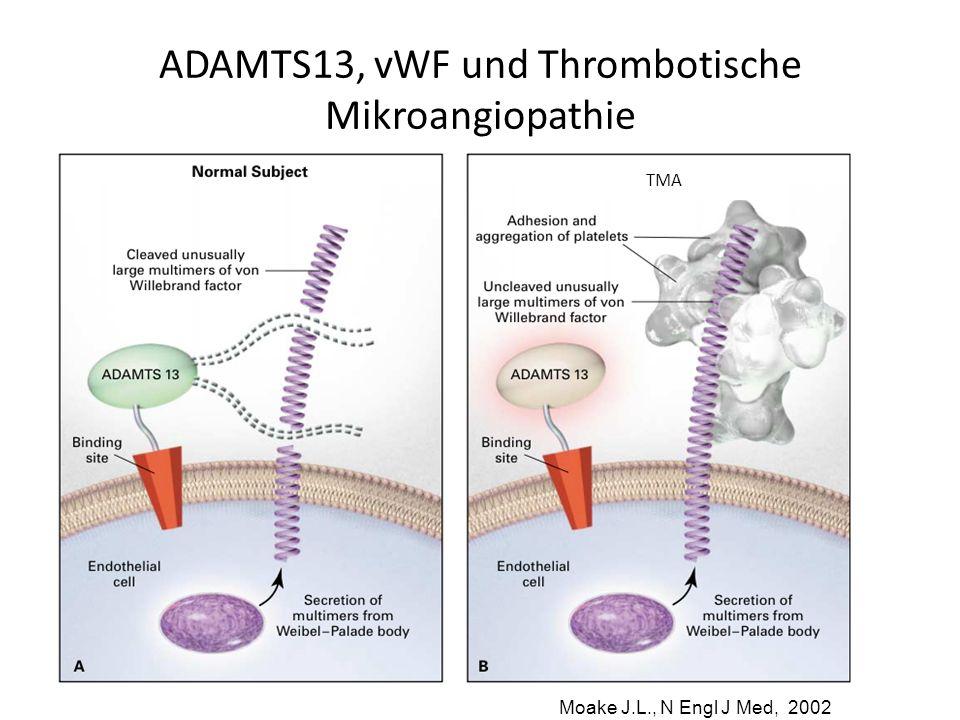 ADAMTS13, vWF und Thrombotische Mikroangiopathie Moake J.L., N Engl J Med, 2002 TMA