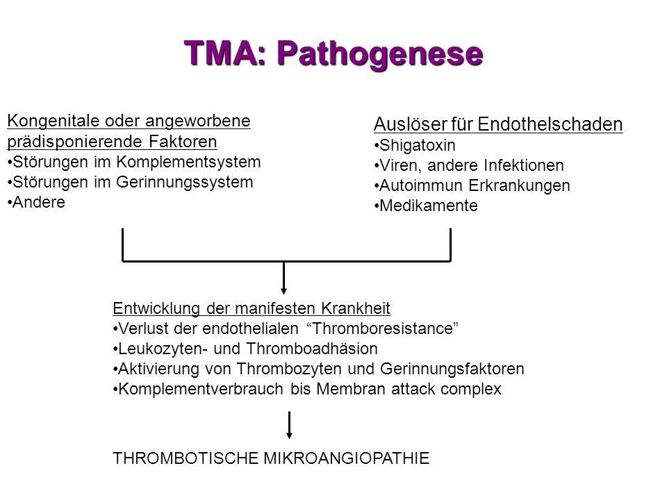 TMA: Pathogenese Auslöser für Endothelschaden Shigatoxin Viren, andere Infektionen Autoimmun Erkrankungen Medikamente Kongenitale oder angeworbene prä