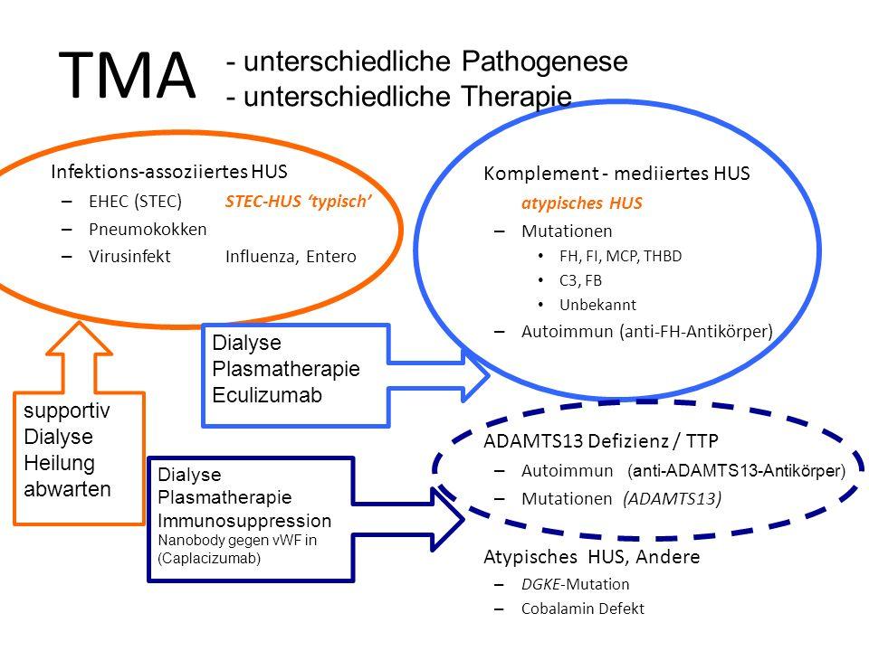 TTP: Thrombotisch-thrombozytopenische Purpura vWF = großes, multimeres Protein, hauptsächlich von Endothelzellen gebildet Adhäsion von Thrombozyten am Endothel Rasche Spaltung durch Protease ADAMTS13 Verminderung der ADAMTS 13 Aktivität – Mutationen – Antikörper gegen ADAMTS 13 Fehlende ADAMTS13 Aktivität führt zu TMA (Thrombotisch- Thrombozytopenische Purpura, TTP) Sofort-Prognose: nicht so schlecht, es reagiert gut zu Plasmapherese un Immunsuppression