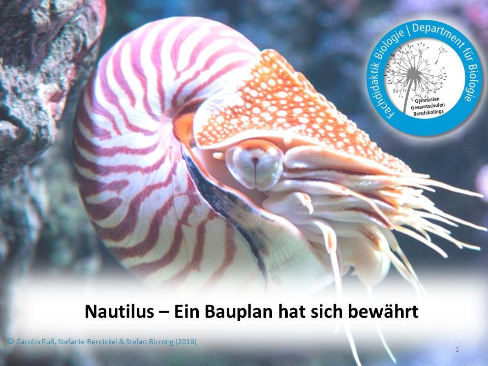 2 Inhaltsverzeichnis kurze Übersicht Aufbau Systematik Lebende Fossilien Schwebemechanismus Lebensweise Fortpflanzung Feinde Vergleich zu anderen Kopffüßern Nautilus in der Schule