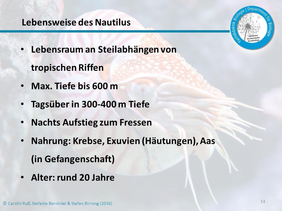 14 Lebensraum an Steilabhängen von tropischen Riffen Max.